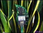 Интерактивная телекоммуникационная программа для растений